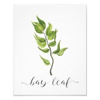 Watercolor Botanical Herb Print Bay Leaf Photograph