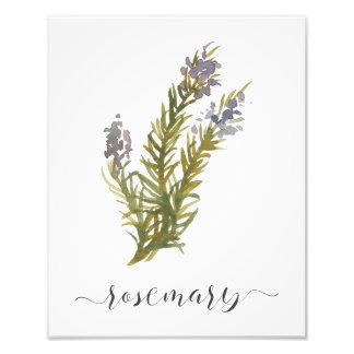 Watercolor Botanical Herb Print Rosemary Photographic Print