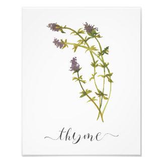 Watercolor Botanical Herb Print Thyme Photo