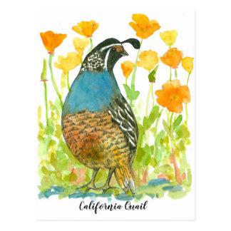 Watercolor California Poppies Quail Bird Postcard