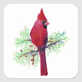 Watercolor Christmas Red Bird Cardinal Square Sticker