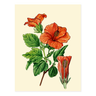 Watercolor Hibiscus Postcard
