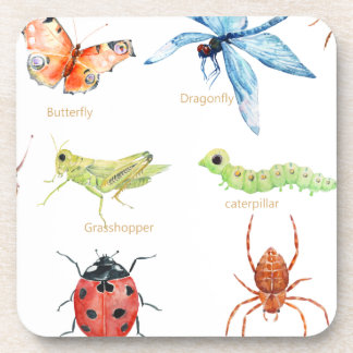 Watercolor insect illustration coaster