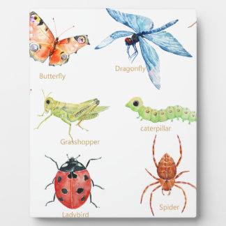 Watercolor insect illustration plaque