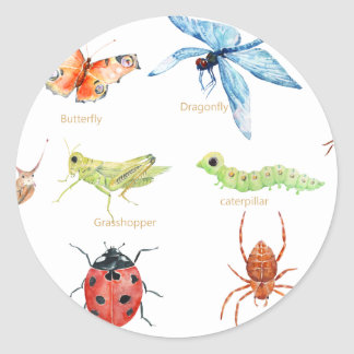 Watercolor insect illustration round sticker