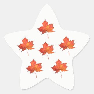 Watercolor Maple Leaf Star Sticker