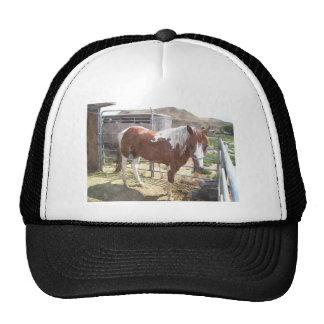 Watercolor Paint Horse Cap