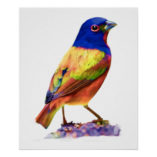 Watercolor Painted Bunting Song Bird Poster