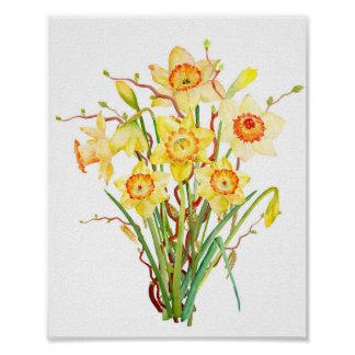 Watercolor spring flower daffodil poster