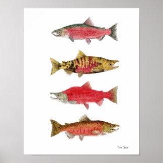 Watercolor Studies of Salmon Poster