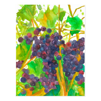 Watercolor Wine Grapes Painting Postcard