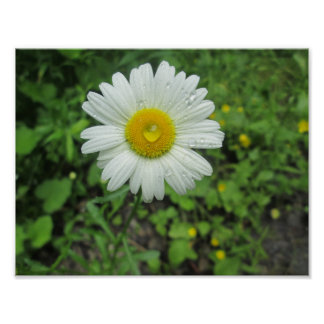 Waterdrop Daisy Poster