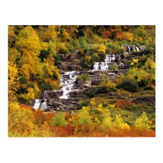 Waterfall below Mt Cannon in Glacier National Postcard