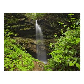 Waterfall falling into sink, Whiteoak Sink, Postcard