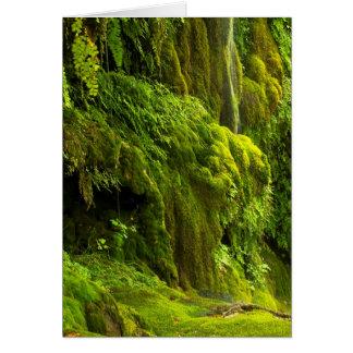 Waterfall in Green Payson,Arizona Card