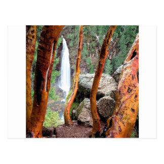 Waterfall Madrone Mill Recreation Area Postcards