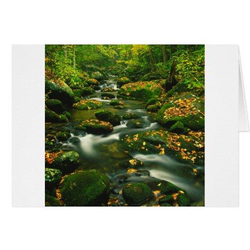 Waterfall Roaring Fork Smoky Mountian Greeting Card