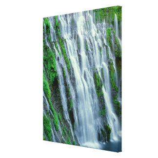 Waterfall scenic, California Canvas Print