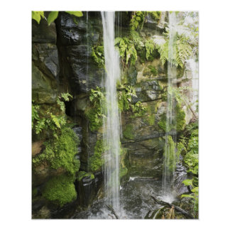 Waterfall Temperate rainforest New Zealand Print