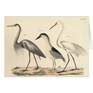 Waterfowl Card