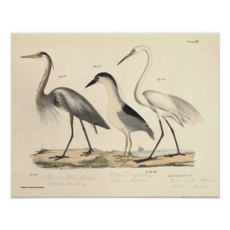 Waterfowl Poster