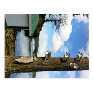 Waterfront Homes Postcard