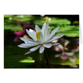 Waterlily - Blank Card