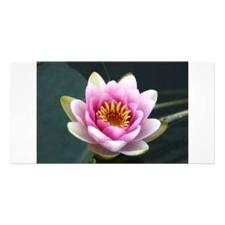 Waterlily Photo Cards