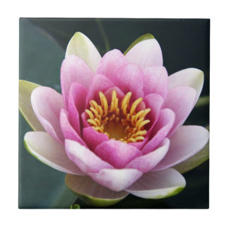 Waterlily Small Square Tile
