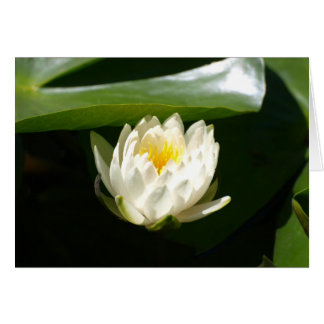 Waterlily Sublime Card