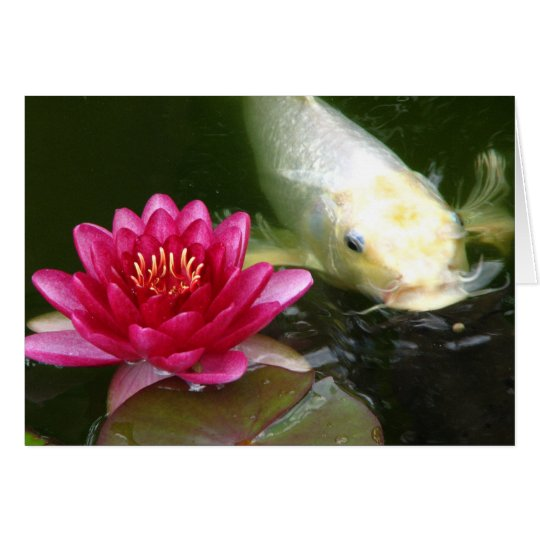 Waterlily with Koi Card