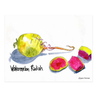 Watermelon Radish postcard