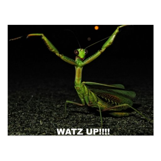 Watz Up Mantis Postcards