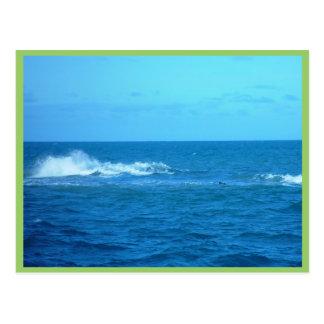 Wave Breaking On Reef At Hillaries Postcard