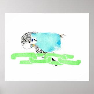 Wave budgerigar poster