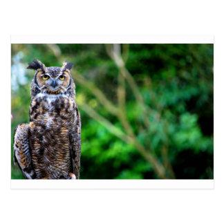 Waving Owl Postcard