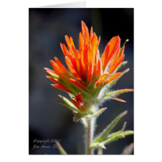 Wavyleaf Indian Paintbrush Card #1