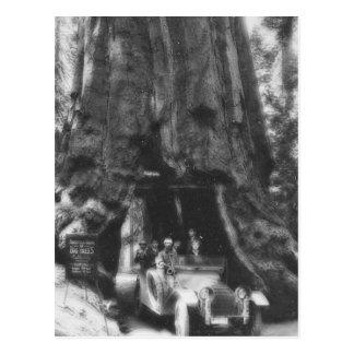 Wawona Tree Magic Lantern Vintage California Postcard