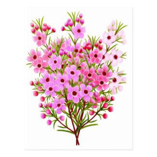 Wax Flower Bouquet Postcard