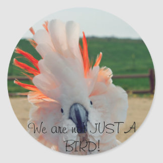 We are not JUST A BIRD! Classic Round Sticker