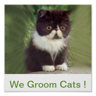 We Groom Cats Sign Poster