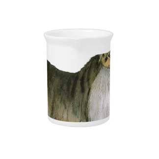 we luv shetland sheepdogs from Tony Fernandes Pitcher