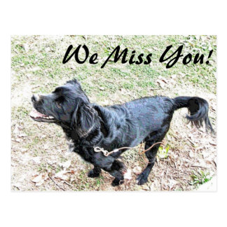 We Miss You Black Pup Postcard