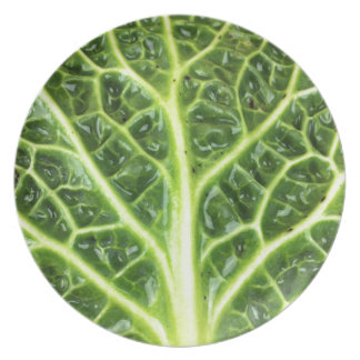 We singing Kohl Savoy cabbage berza chou vert Plate