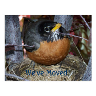 We ve Moved Robin Announcement Post Cards