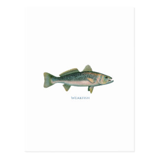 Weakfish Postcard