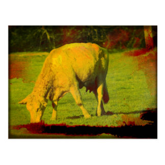 Weathered Pasture Postcard