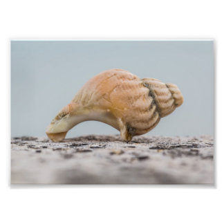 Weathered Sea Shell Photographic Print
