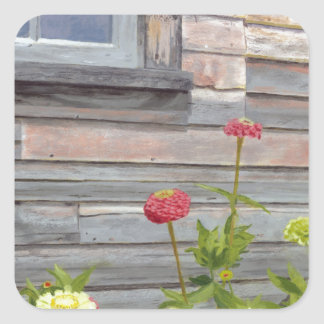 Weathered wood and Zinnias Square Sticker