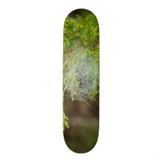 Web In Cedar 20.6 Cm Skateboard Deck